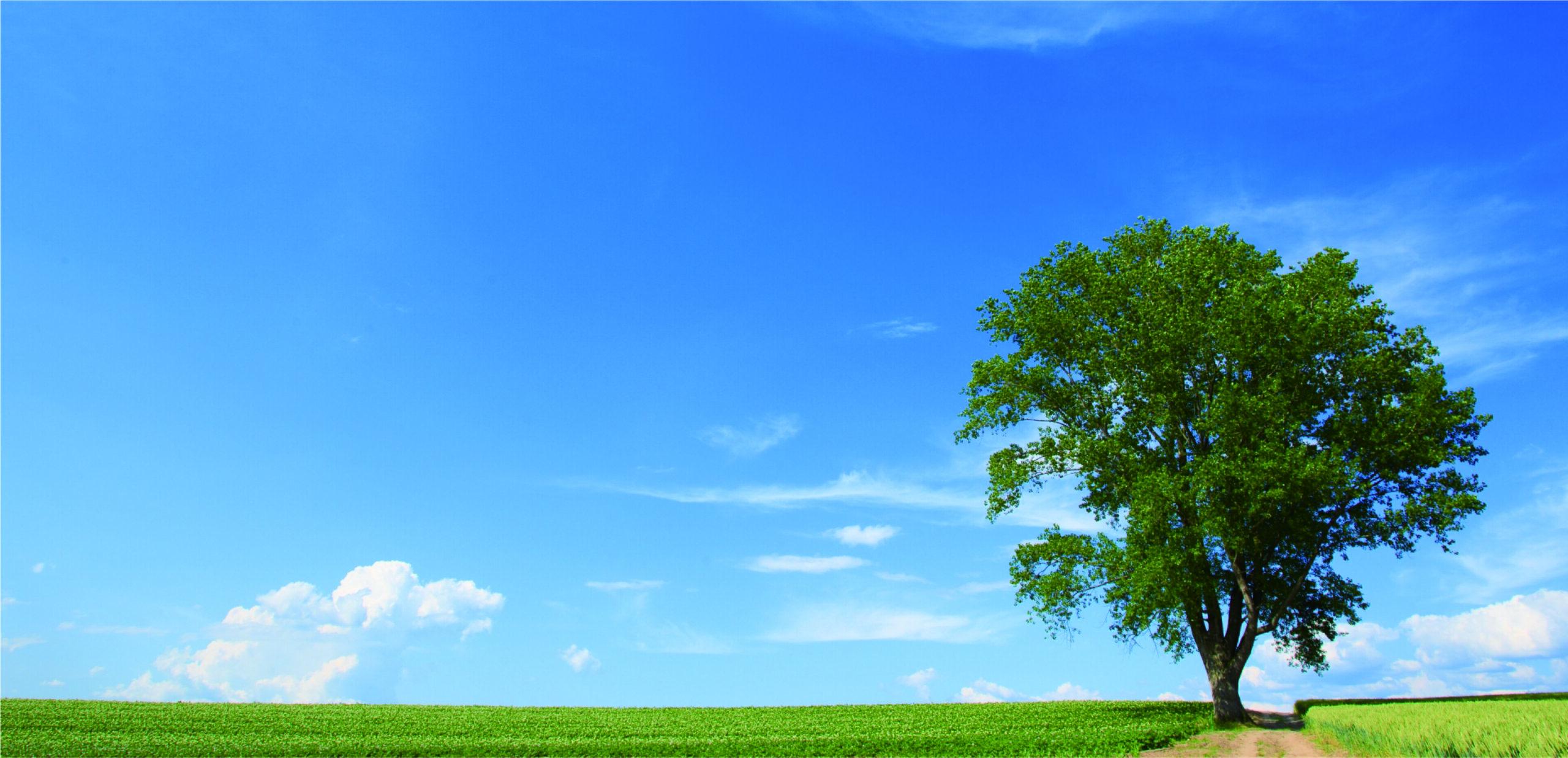 ヘッダー画像 青空に大きな木が一本生えている写真です